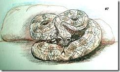 07_rattlesnake copy