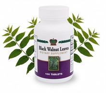 Black Walnut Leaves / Листья черного ореха