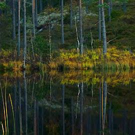 Fall silence by Alf Winnaess - Uncategorized All Uncategorized