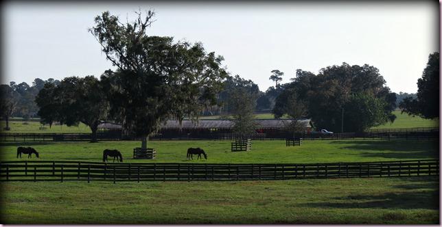 horsesIMG_4519
