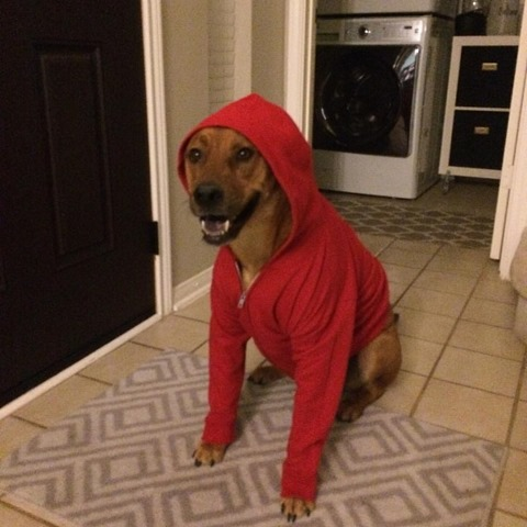 ET Phone Home Halloween Costume for dogs Elliot basket bicycle DIY Domesticability