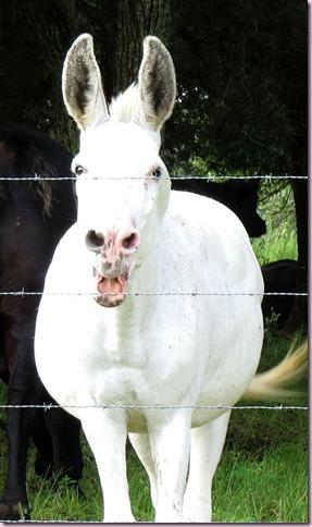 donkeyclosseIMG_2764