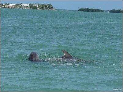 Dolphin Mating near Venture Out channel