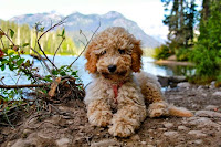 So adorable Gorgeousdoodle.