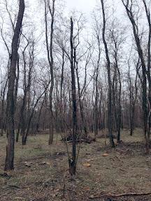 лес4.jpg
