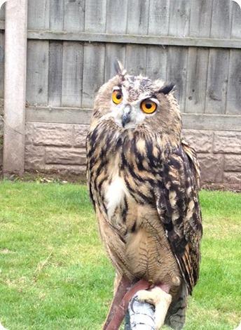 18117_Church_Lane_Owl