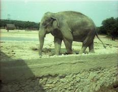 1983.06.25-040.02 éléphant