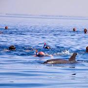 delfiny el Gouna.jpg