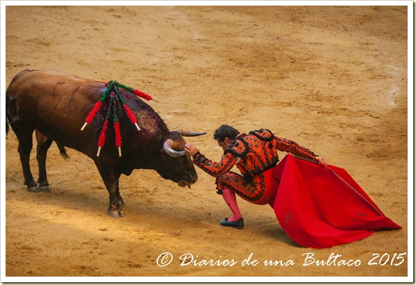 Toros1-9753