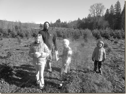 11-27 Christmas tree 1