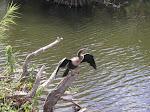 Everglades National Park, Florida  [2002]