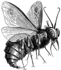 525px-Beelzebub