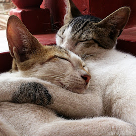peace by Adarsh Sp - Animals - Cats Playing ( cats, mobile photos, peace, sleeping, cuddle )