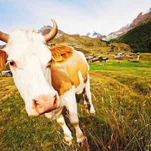 Switzerland-Zermatt-Alena-Romanenko (11).jpg
