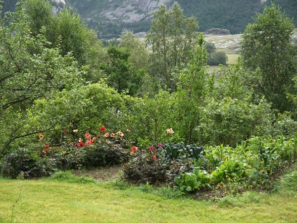 2015-08-12 Høllesli (34)