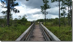 Sawgrass Marsh Overlook