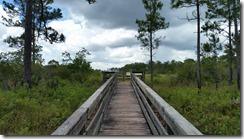 Sawgrass Marsh Overlook