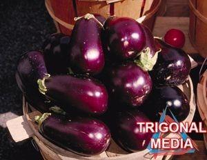 terung ungu