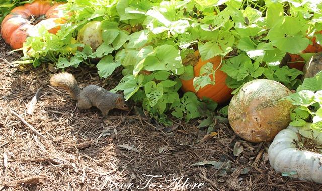 Pumpkins Arboretum 116
