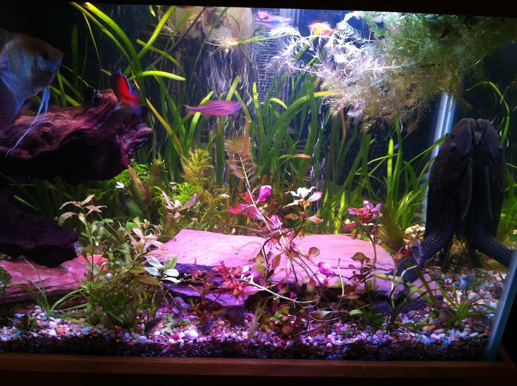 Cell phone pictures of my 75 gallon tank IMAGE_0920079F-7009-418A-8AFD-2D8869684C14