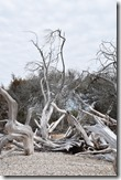 Driftwood trees-best