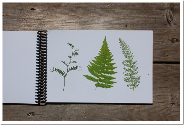leaf book (1)