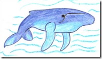 ballena dibujo color (5)