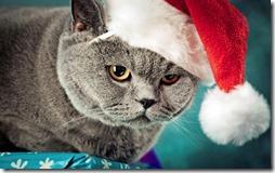 77- gatos navidad (1)- buscoimagenes