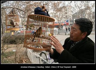 Amateur d'oiseaux | Baoding - Hebei - Chine | © Yves Traynard - 2009