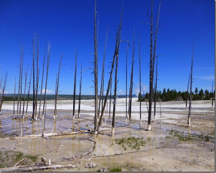 Yellowstone 054 (640x480)