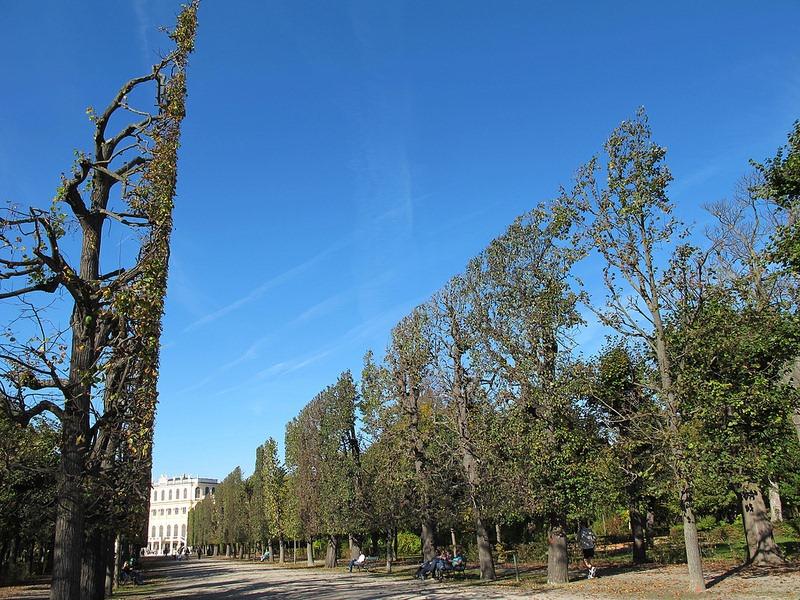 schönbrunn-palace-trimmed-trees-11