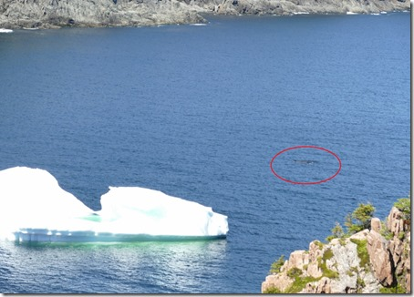 nl_lascie_d6_iceberg_whale with circle