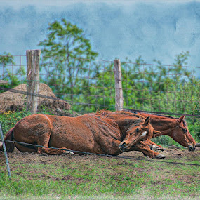 by Teena Perkins Betourney - Animals Horses ( field, pasture, horse, animal )