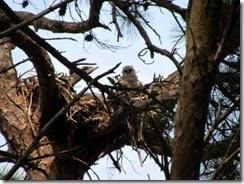 Owl's nest