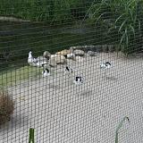 Zootour Teil 3