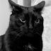 Foto Kucing Hitam Terlucu