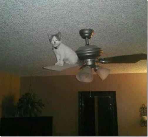 gatos sitios para esconderse (18)