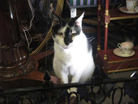 cat_antique shop 2