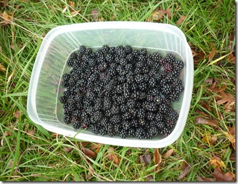 7 blackberries astwood locks