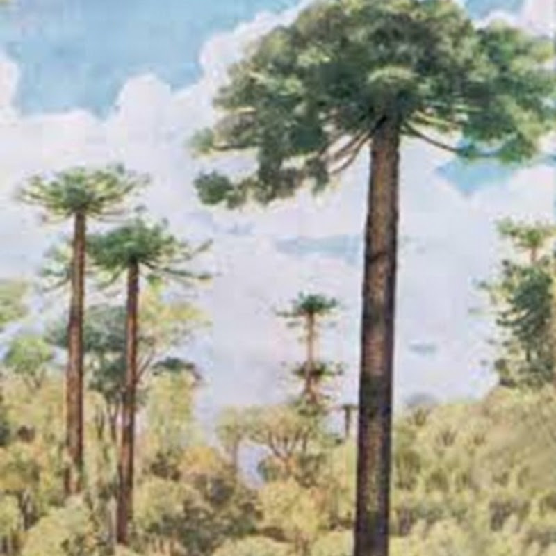 La Reserva Palmitera es un área natural protegida de la provincia de Misiones.