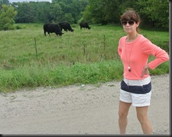 Cheryl surveys the Cows