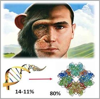 macaco-homem-dna-semelhanças