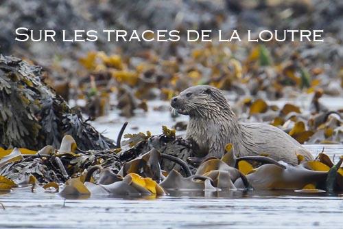 Gdzie ta wydra / Sur les traces de la loutre (2005) PLSUB.TVRip.XviD / PLSUB