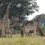 Camelthorn Lodge, Hide, Giraffen © Foto: Ulrike Pârvu | Outback Africa Erlebnisreisen