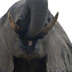 Camelthorn Lodge, Hide, Elefant © Foto: Ulrike Pârvu | Outback Africa Erlebnisreisen