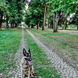 by Željko Salai - Animals - Dogs Portraits