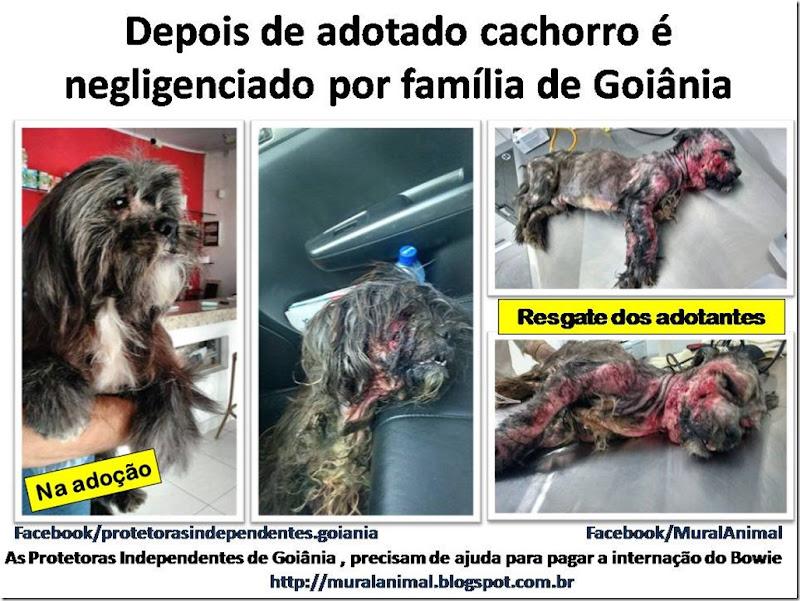 Depois de adotado cachorro negligenciado