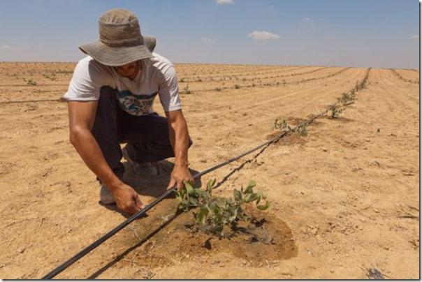 Israel_sistema de irrigação