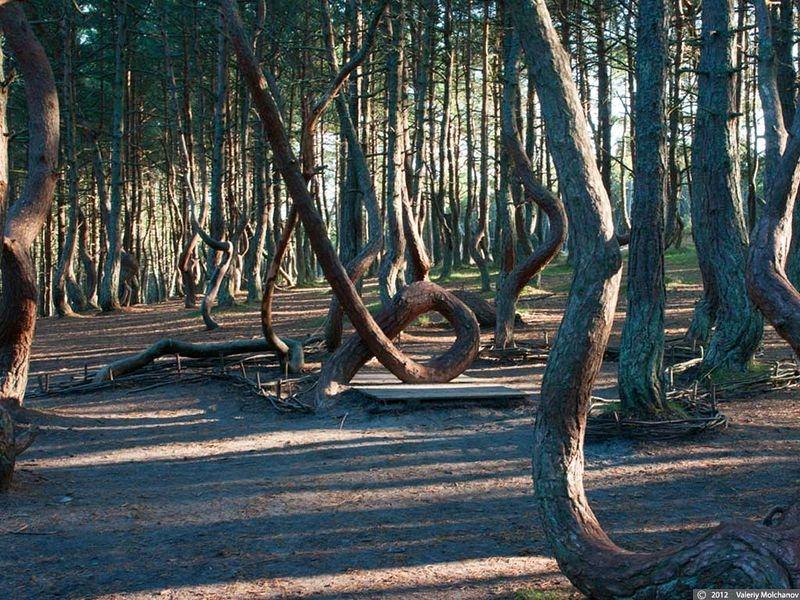dancing-forest-kaliningrad-3