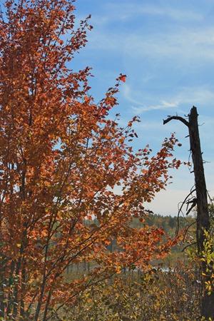 Guyles Lake Oct 3 (2)